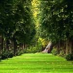 Sommer-Wald-Grün-Gras-Pfad-1080x1920